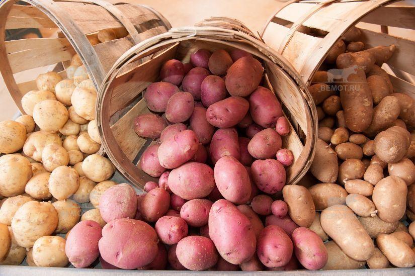задача утепления овощехранилища это сохранность урожая картофеля